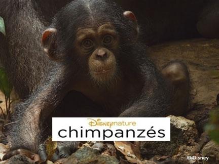 Cimpanzés, film, activités