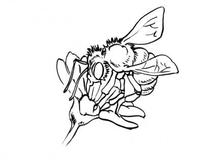 Coloriage abeille 11 coloriage abeilles coloriage animaux - Abeille coloriage ...