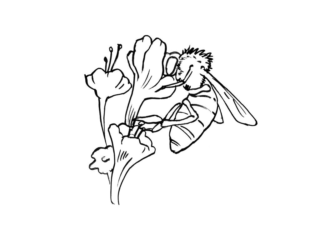 desert oasis coloring pages - photo#25