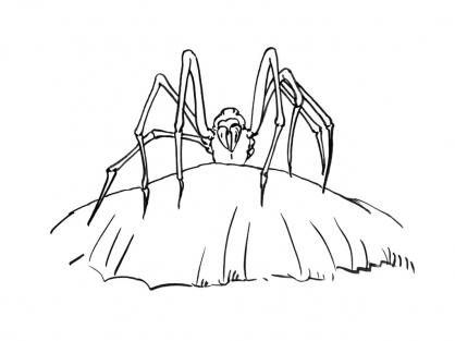 Coloriage Araignée 10