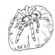 Coloriage Araignée 11