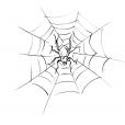 Coloriage Araignée 12