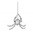 Coloriage Araignée 13