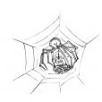 Coloriage Araignée 15