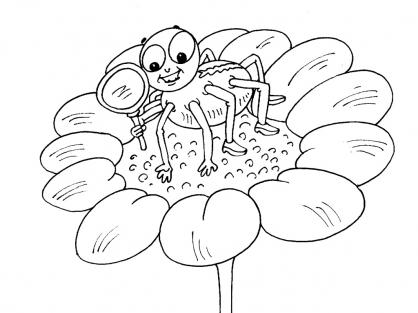 Coloriage Araignée 16