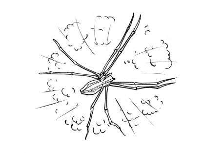 Coloriage Araignée 3