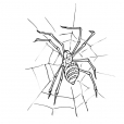 Coloriage Araignée 8