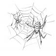 Coloriage Araignée 9