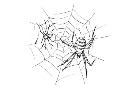 Coloriage araign e 9 coloriage araign es coloriage animaux - Araignee dessin ...