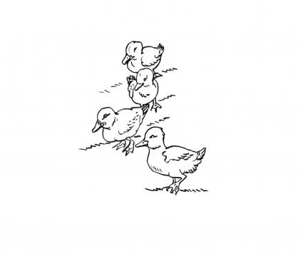 Coloriage Canard 12
