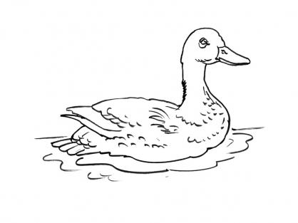 Coloriage Canard 15