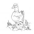 Coloriage Canard 3