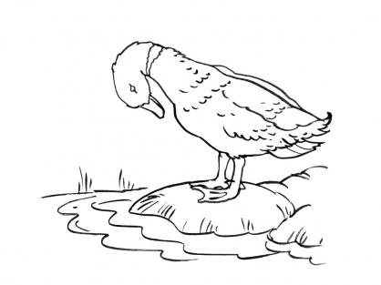 Coloriage Canard 4