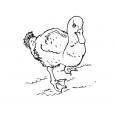 Coloriage Canard 6