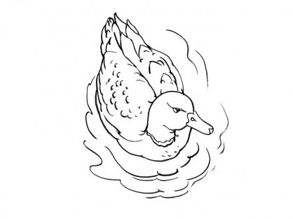 Coloriage Canard 7