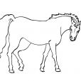 Coloriage Cheval 14