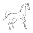 Coloriage Cheval 5