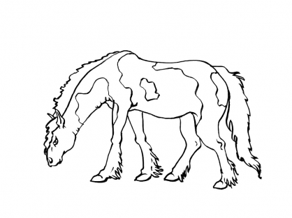 Coloriage Cheval 6