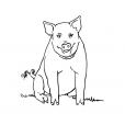 Coloriage Cochon 1