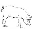 Coloriage Cochon 10