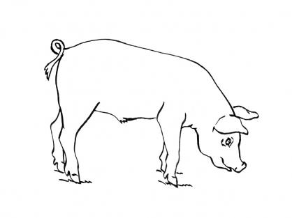 Coloriage cochon 10 coloriage cochons coloriage animaux - Dessin cochon debout ...