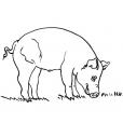 Coloriage Cochon 12