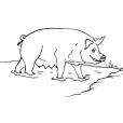 Coloriage Cochon 13