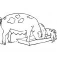 Coloriage Cochon 14