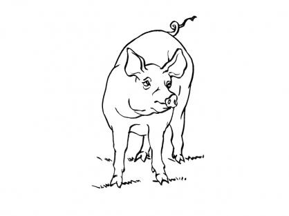 Coloriage Cochon 15