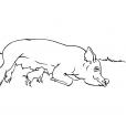 Coloriage Cochon 2