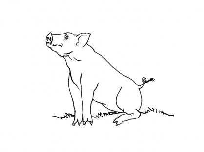 Coloriage Cochon 3