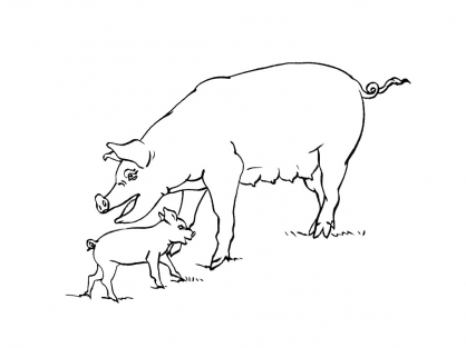 Coloriage Cochon 5