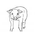 Coloriage Cochon 6