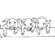 Coloriage Cochon 7