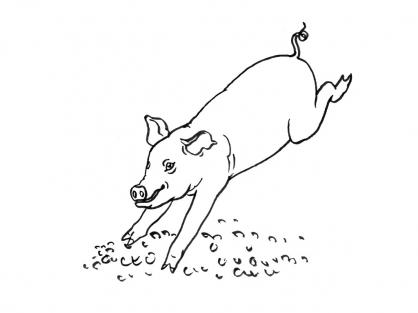 Coloriage Cochon 8
