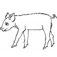 Coloriage Cochon 9