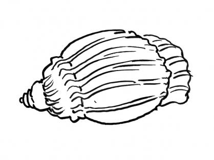 Coloriage Coquillage 10