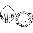 Coloriage Coquillage 7