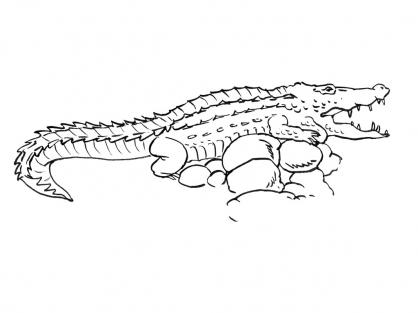 Coloriage Crocodile 11