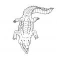 Coloriage Crocodile 12