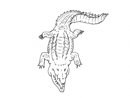 Coloriage Crocodile 12