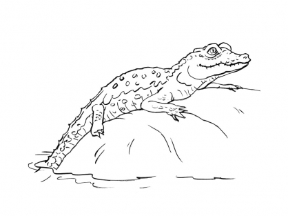 Coloriage Crocodile 13