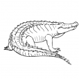 Coloriage Crocodile 14