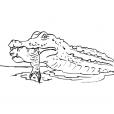 Coloriage Crocodile 2
