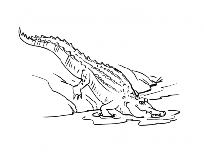 Coloriage Crocodile 3