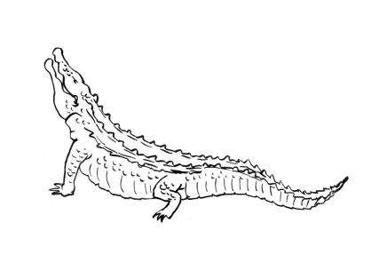 Coloriage Crocodile 4