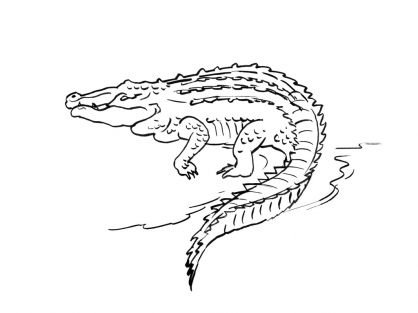 Coloriage Crocodile 6
