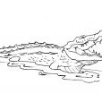 Coloriage Crocodile 7