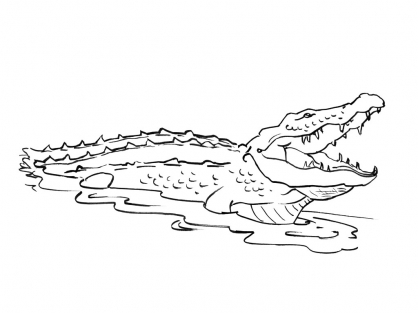 Dessin de crocodiles - Dessiner un crocodile ...