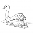 Coloriage Cygne 10